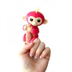 Markoló Maki, a kapaszkodó majombarát